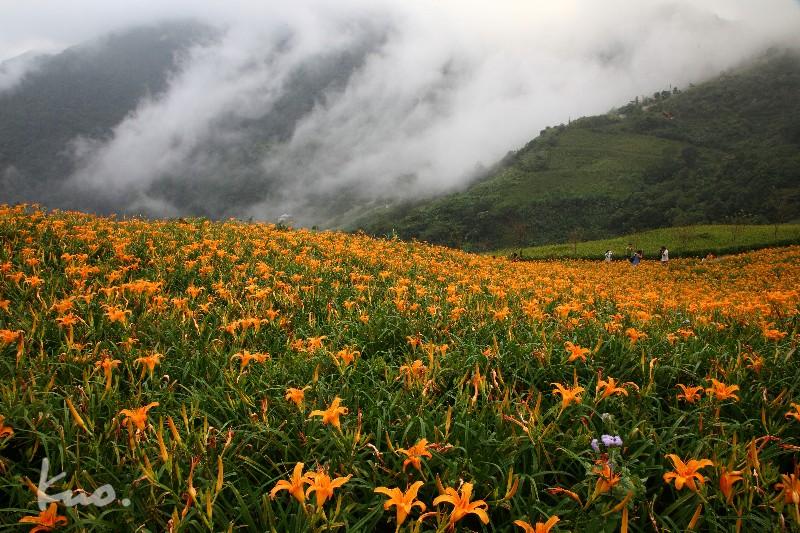 圖9.忘憂谷中間點平視,上升的雲霧,拉抬山谷氣勢,令人相當震撼,山在虛無飄渺中,延伸的空靈感,感受得到這片山谷的魅力。CANON-5D2攝。