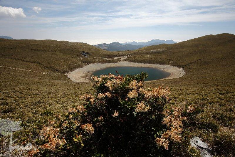 圖十二:有台灣馬醉木的嘉明湖
