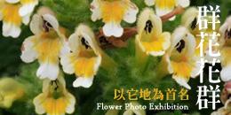 banner_flower_2