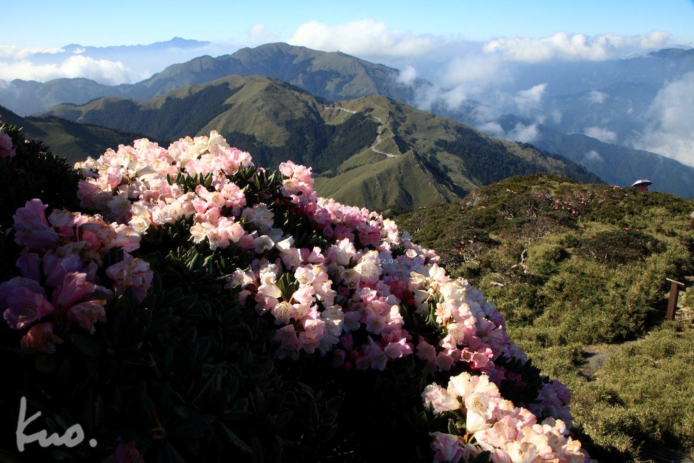 迎接2014—C合歡山區〜1 攝於合歡東峰201/5/23,5D2攝。