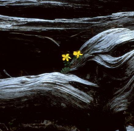 8--1992.10哈蘇的首拍,120底片,啟動老郭深沉的山岳攝影。